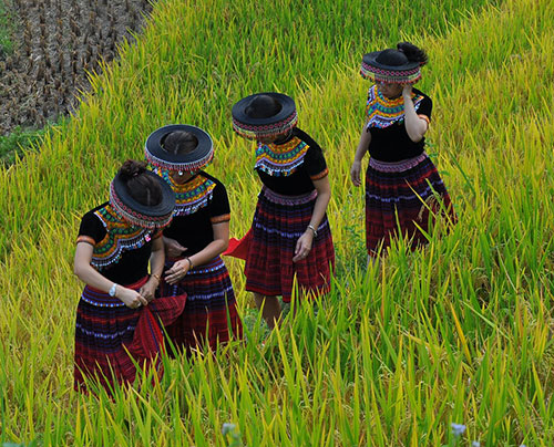 Hmong hat2